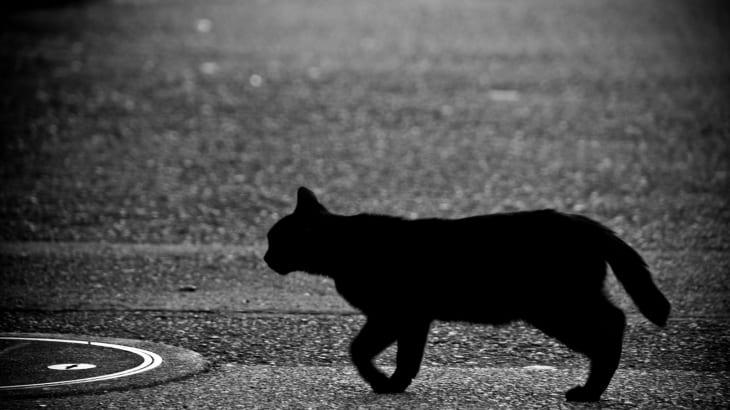 黒猫の幽霊