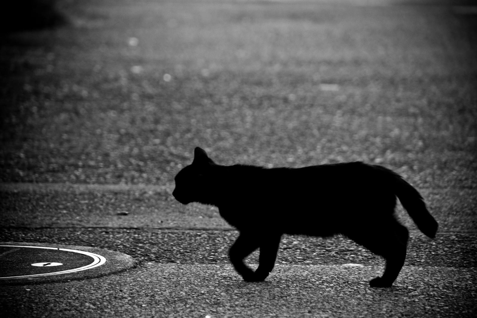 黒猫の死とつちかいの幽霊体験