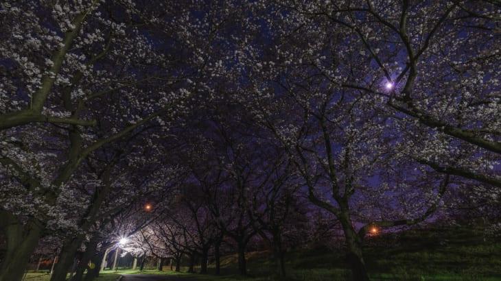 夜の公園の心霊体験
