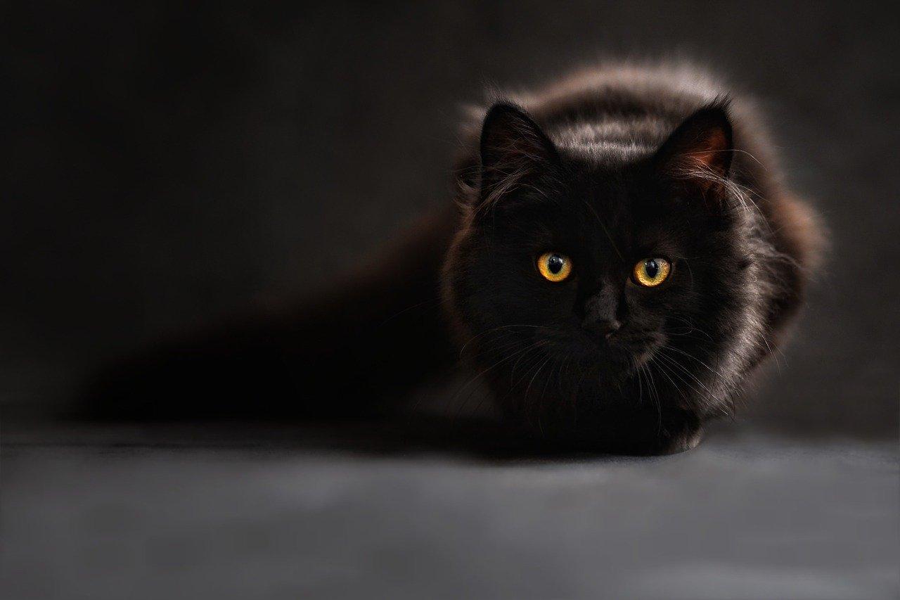 【怪奇現象】好奇心猫!鹿児島の廃墟で肝試し中足元に忍び寄る恐怖