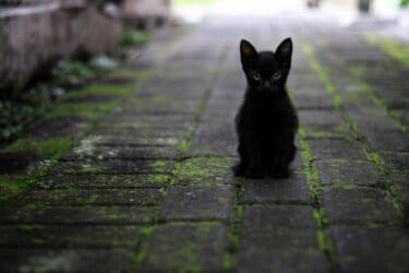 亡き飼い猫の気配が!庭から出てきた骨は?